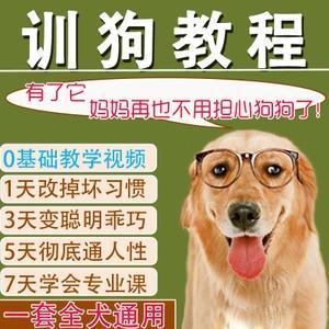 训狗教程视频 新手训狗的方法大全【史上最全】