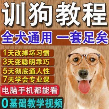 新手训狗方法大全视频教程 教你怎么样训狗狗技巧