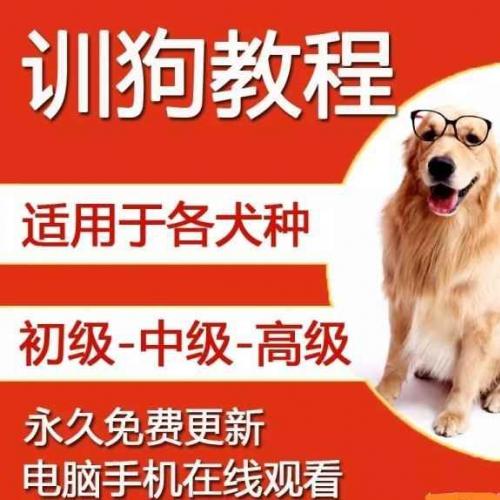 [训狗教程] 训犬教程视频大全百度云网盘